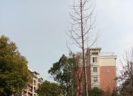 宝庄公寓 4室2厅2卫 170㎡ - 大江东房产网